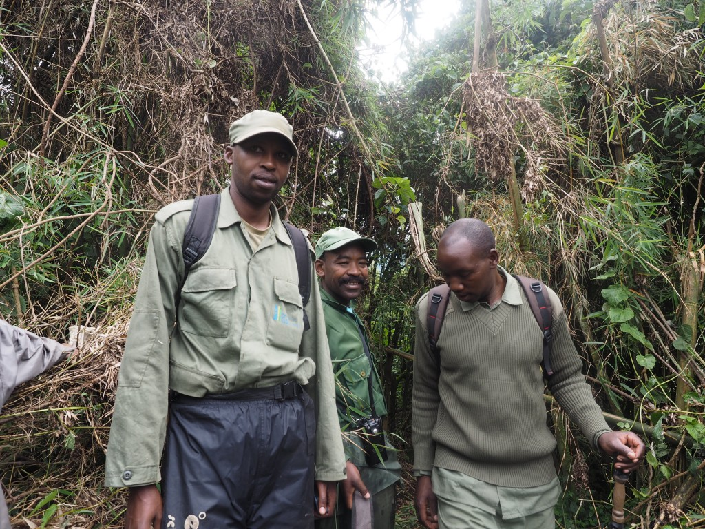Tender Giants – My Experience with the Gorillas of Rwanda