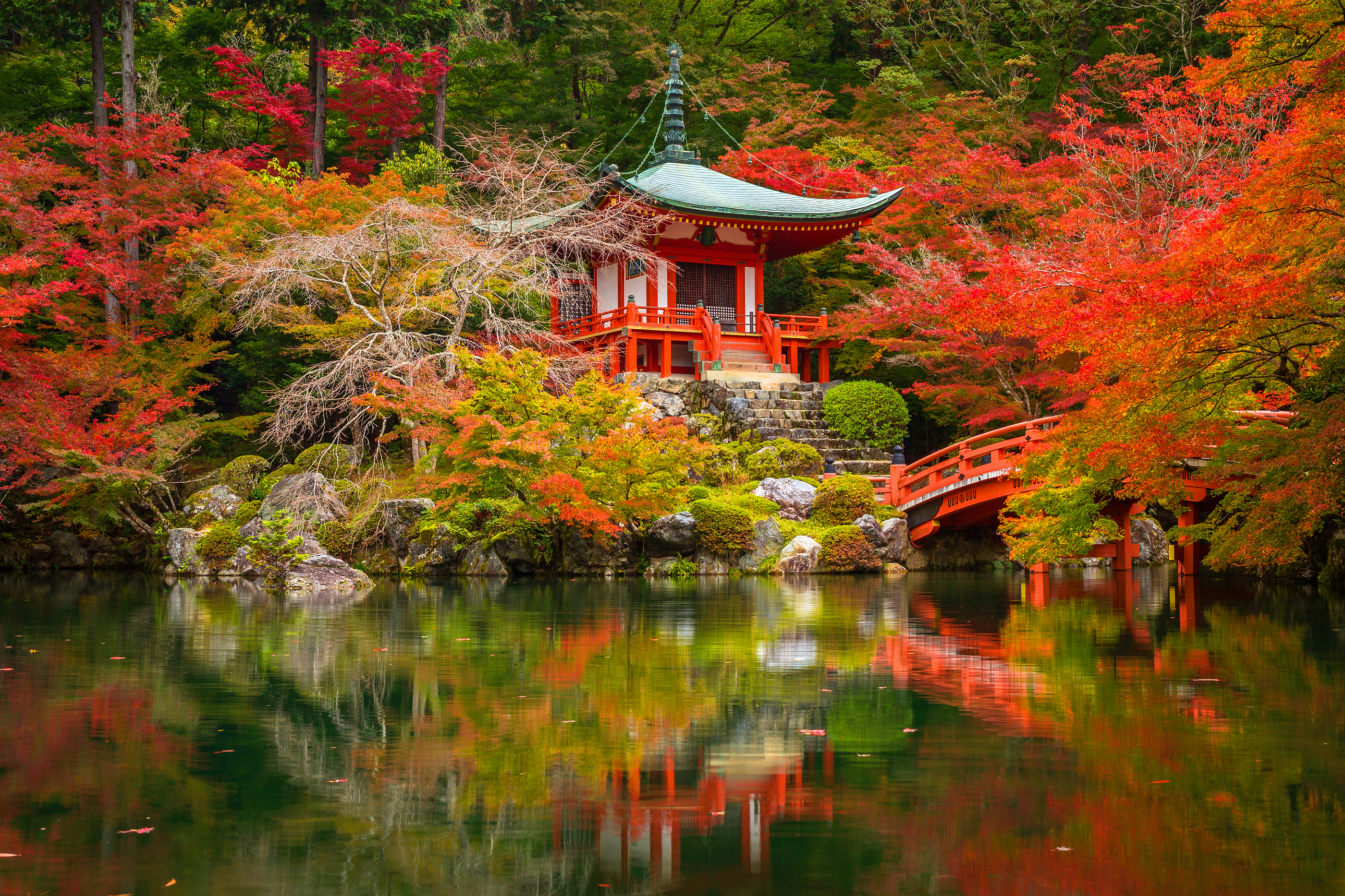 Beautiful autumn in japanese garden with colorful maple trees, K ...