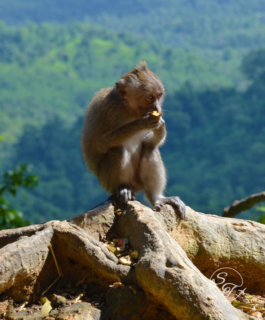 Eating monkey in mountains of Lombok