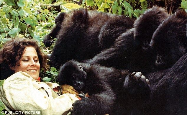 Tender Giants – My Experience with the Gorillas of Rwanda