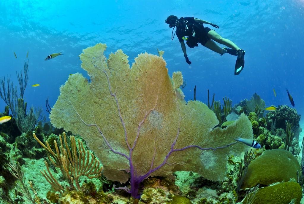 The World's Top Three Scuba Diving Destinations