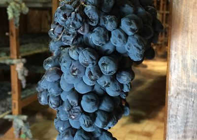 Grapes hanging