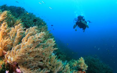 5 Best Dive Sites in Asia