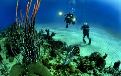 The World's Top Three Scuba Diving Destinations